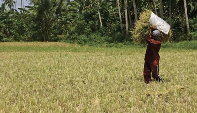 Come Aumentare La Sicurezza Alimentare Senza Rovinare Il Pianeta