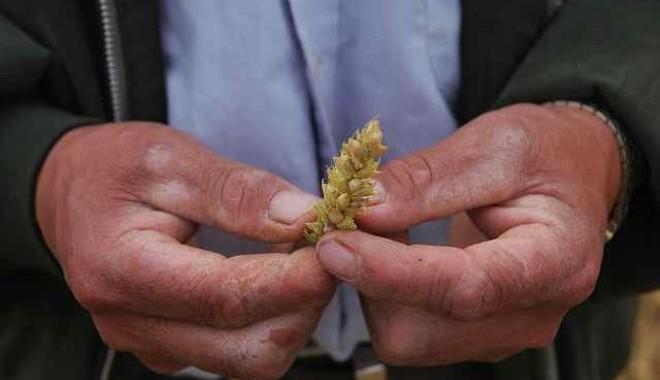 L'Ecuador Investe Sui Piccoli Agricoltori Per Migliorare La Produzione Di Grano Nazionale