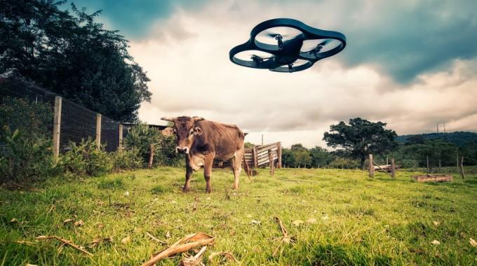 Copertina – Cow Vs Drone