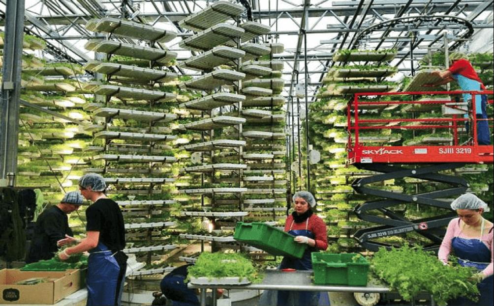 Vertical Farm - EcoGeek