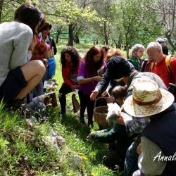 Corso di riconoscimento erbe spontanee, commestibili e officinali